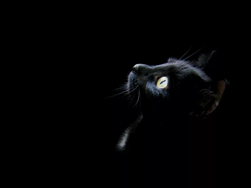Кот рисунок, прикольные картинки темнота