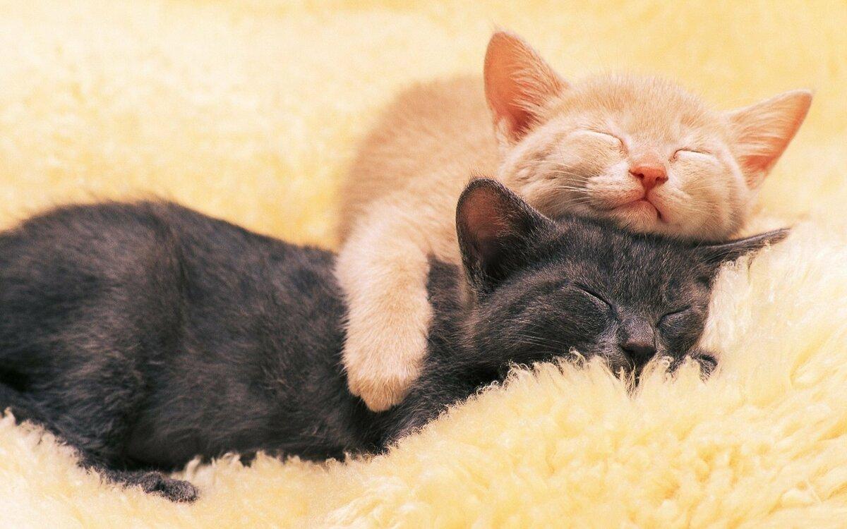 Спокойной ночи картинка с котиками