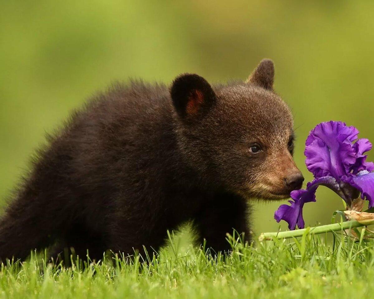 Рисунки, картинки с медведями и цветами