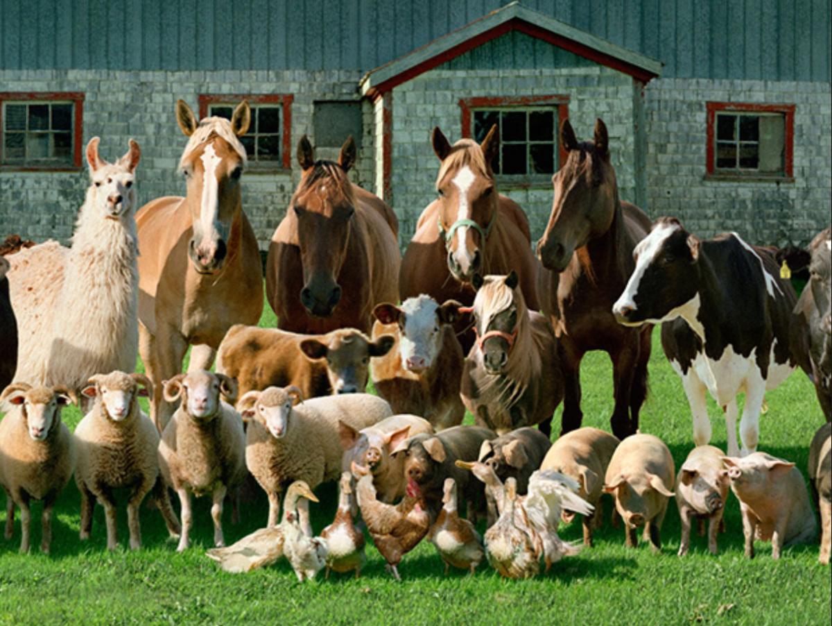 картинки разных пород с названиями животных фермы персонаж