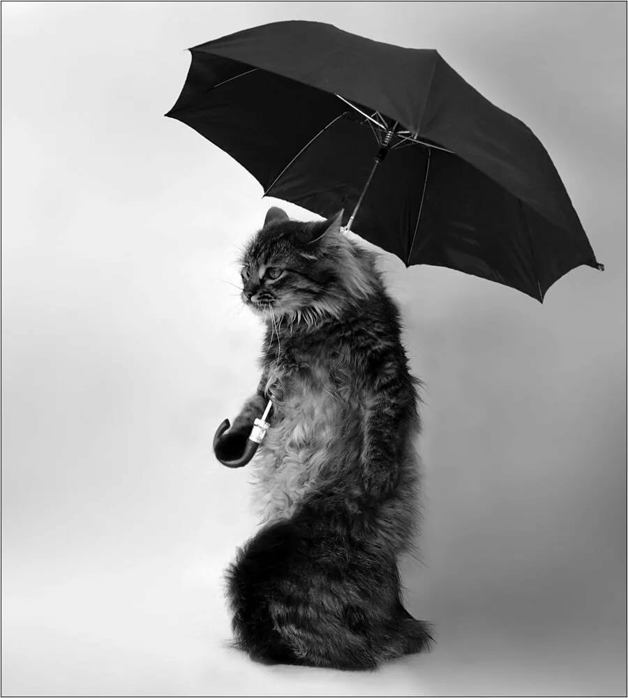 Пожелание всех, зонт картинки смешные