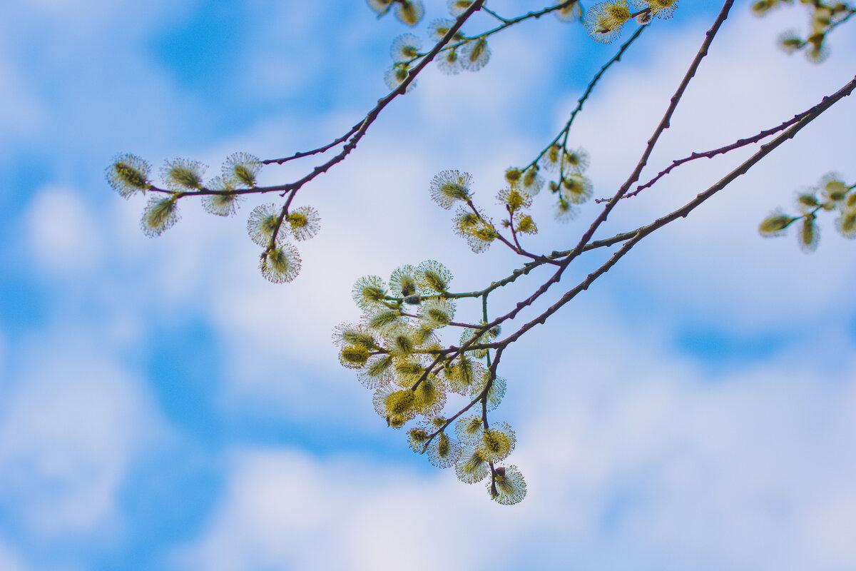 картинки красивое весеннее небо видео