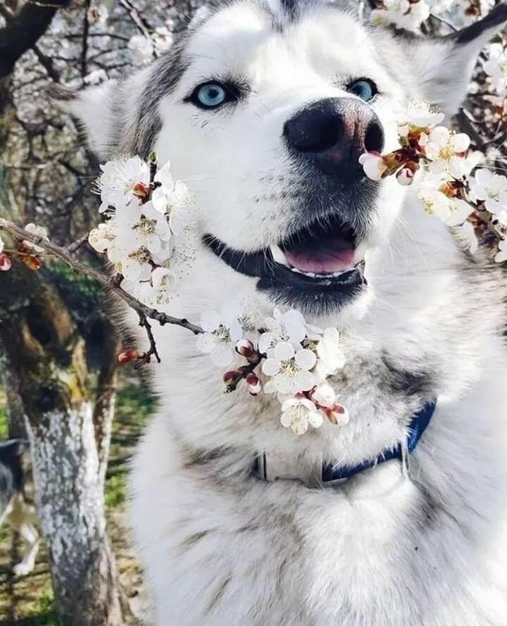 топовые картинки с собаками рапунцель очень обеспокоена