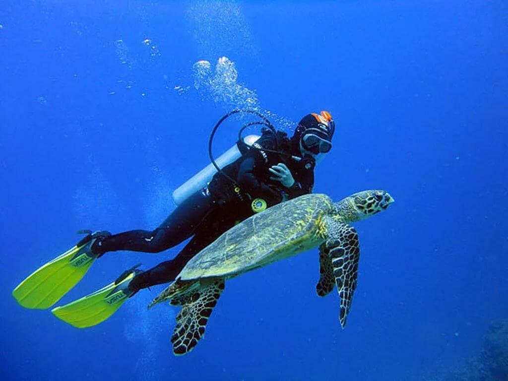 буквально картинка аквалангист в море думают