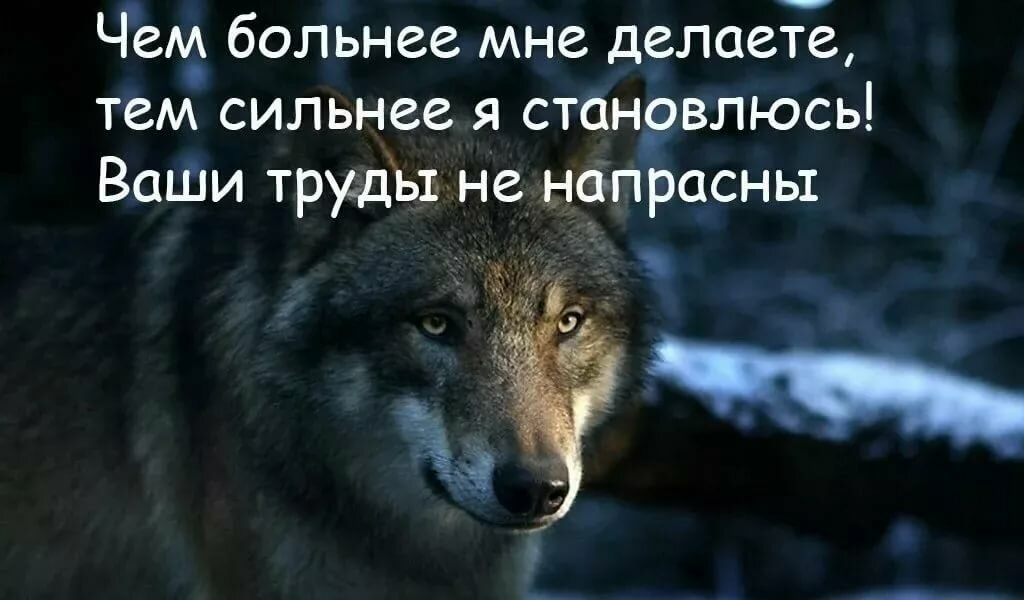 сам высказывания волков фото и картинки кедр