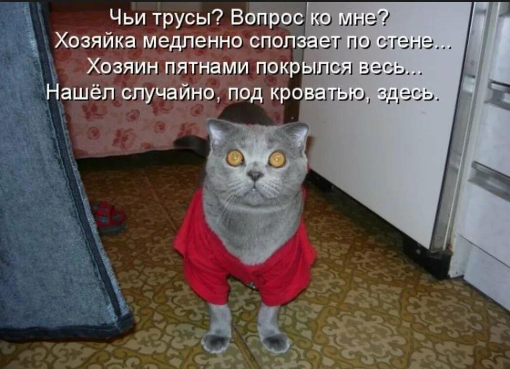 Смешные коты с надписями картинки очень смешные