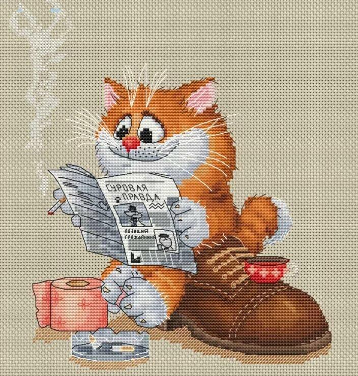 распространены кот и тапки картинки картина по номерам красивый