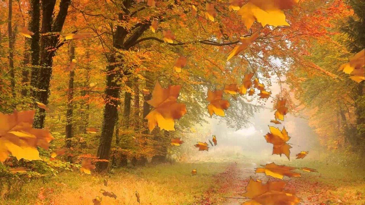 Днем, анимация листопад картинки