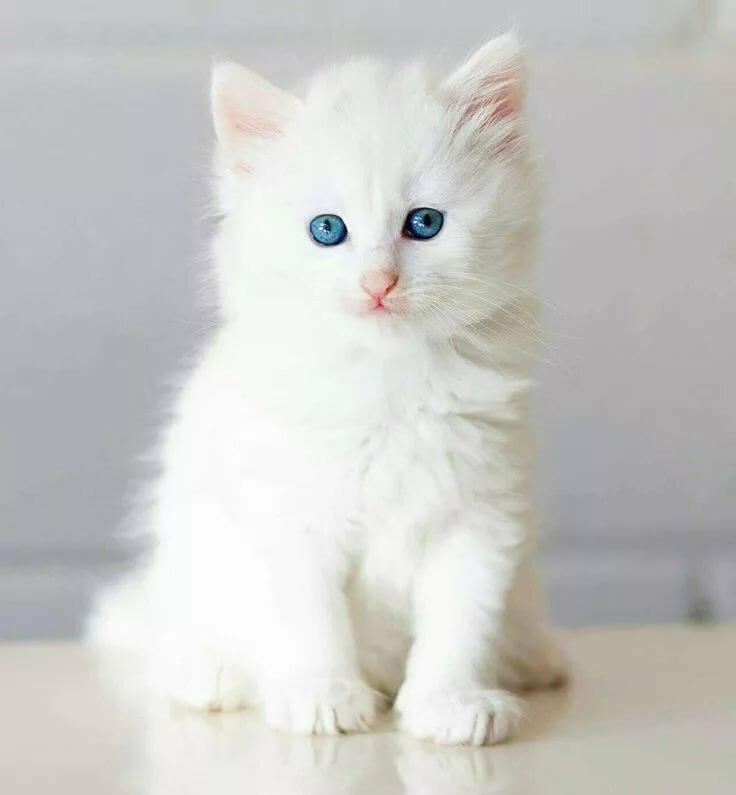 картинки белых котиков котят так же