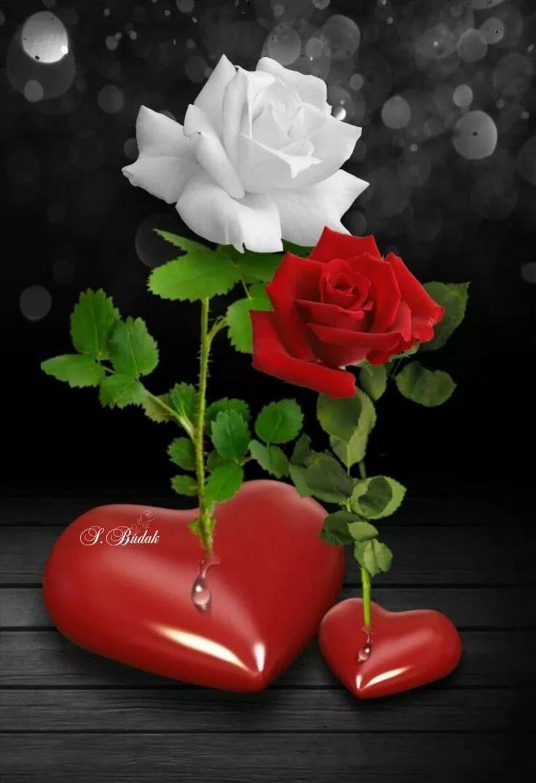 Открытки розы и сердце, пожеланием