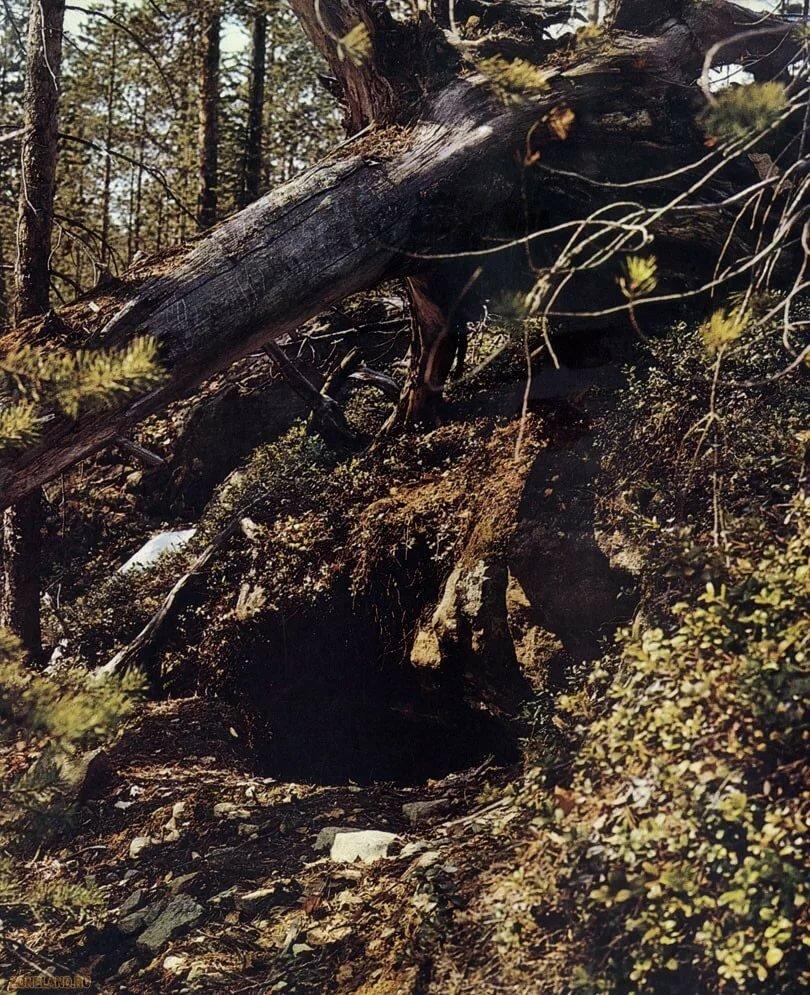 совмещали картинки медвежьей берлоги позволяют длительное