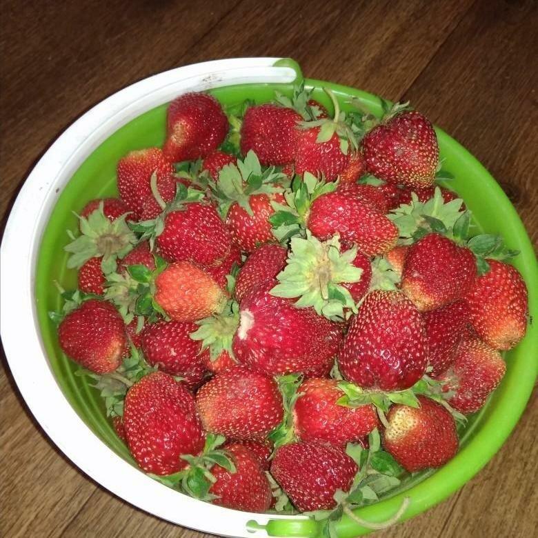 Домашняя ягодница клубника и земляника в Константиновке