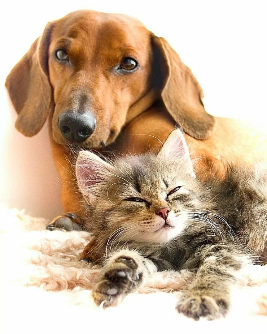 Прикольные, как найти открытки с животными