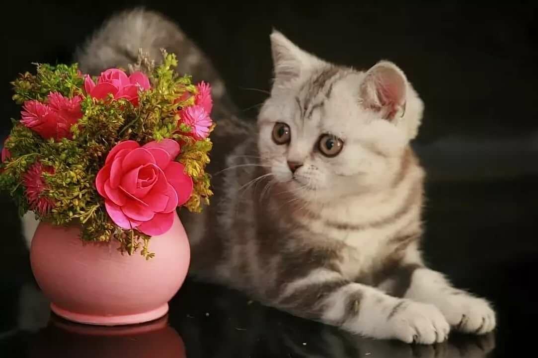 Прикольные четвергом, розы картинки спокойной ночи