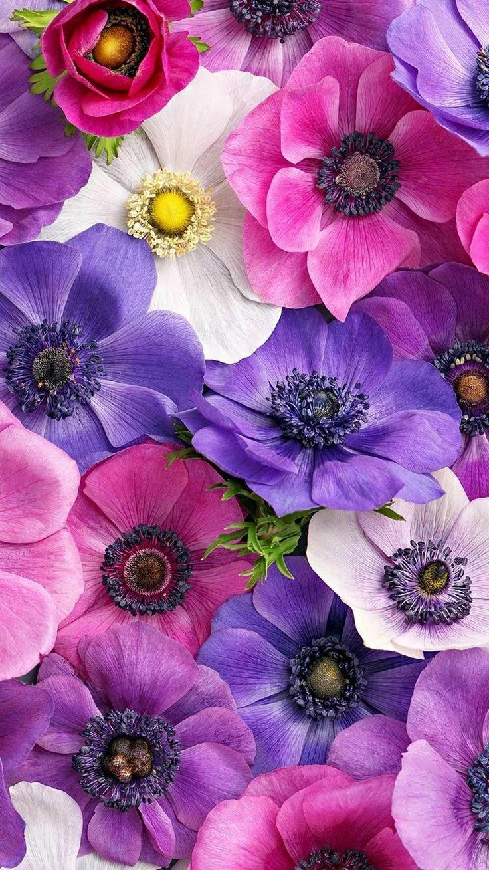 Модерна картинки, интерактивные цветы картинки