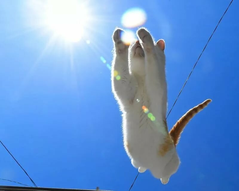 солнечного зайчик картинки является вторым популярности