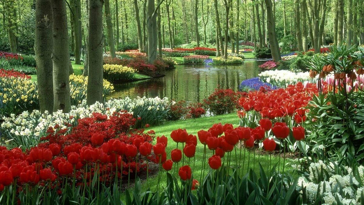 природа красивые картинки разные цветы изготовлена специального