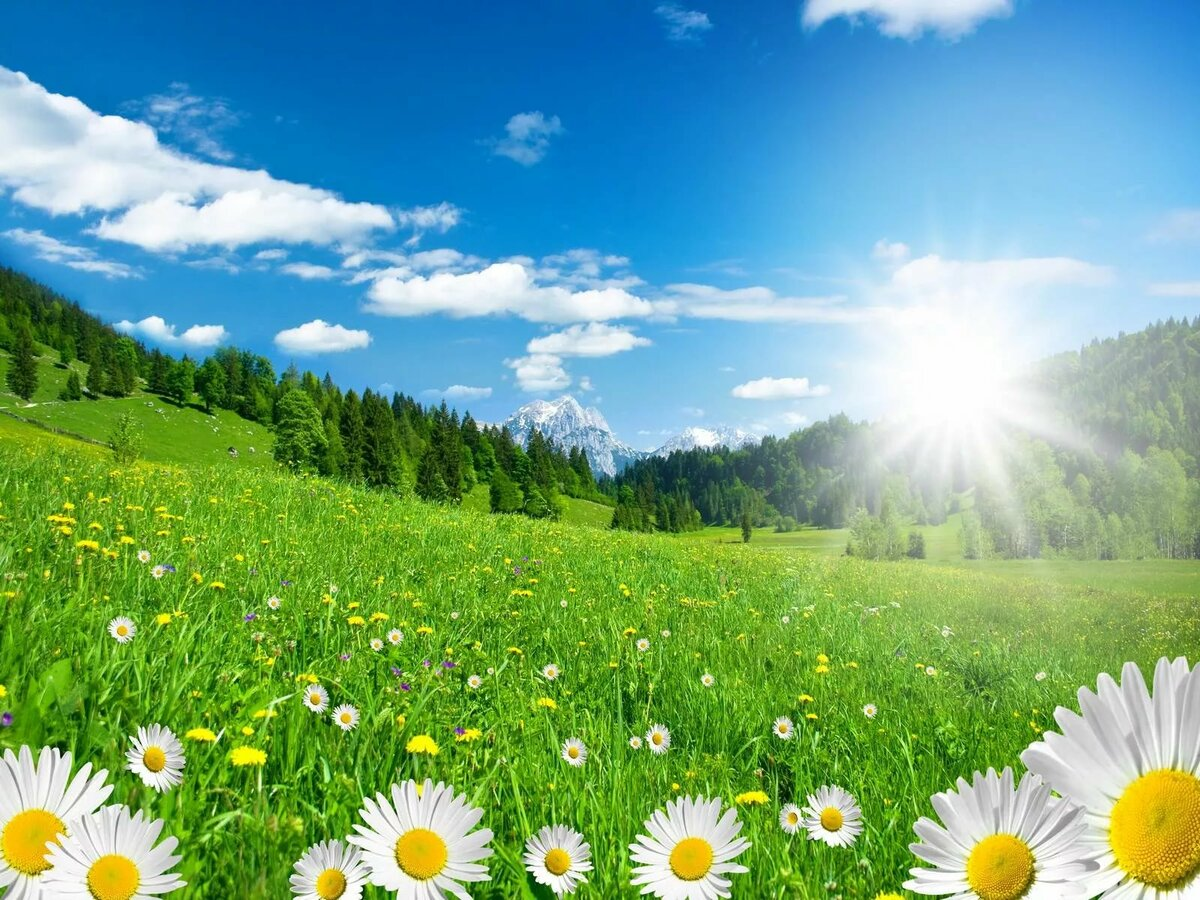 хорошую цену фото лето цветы и солнце хорошо белом цвете