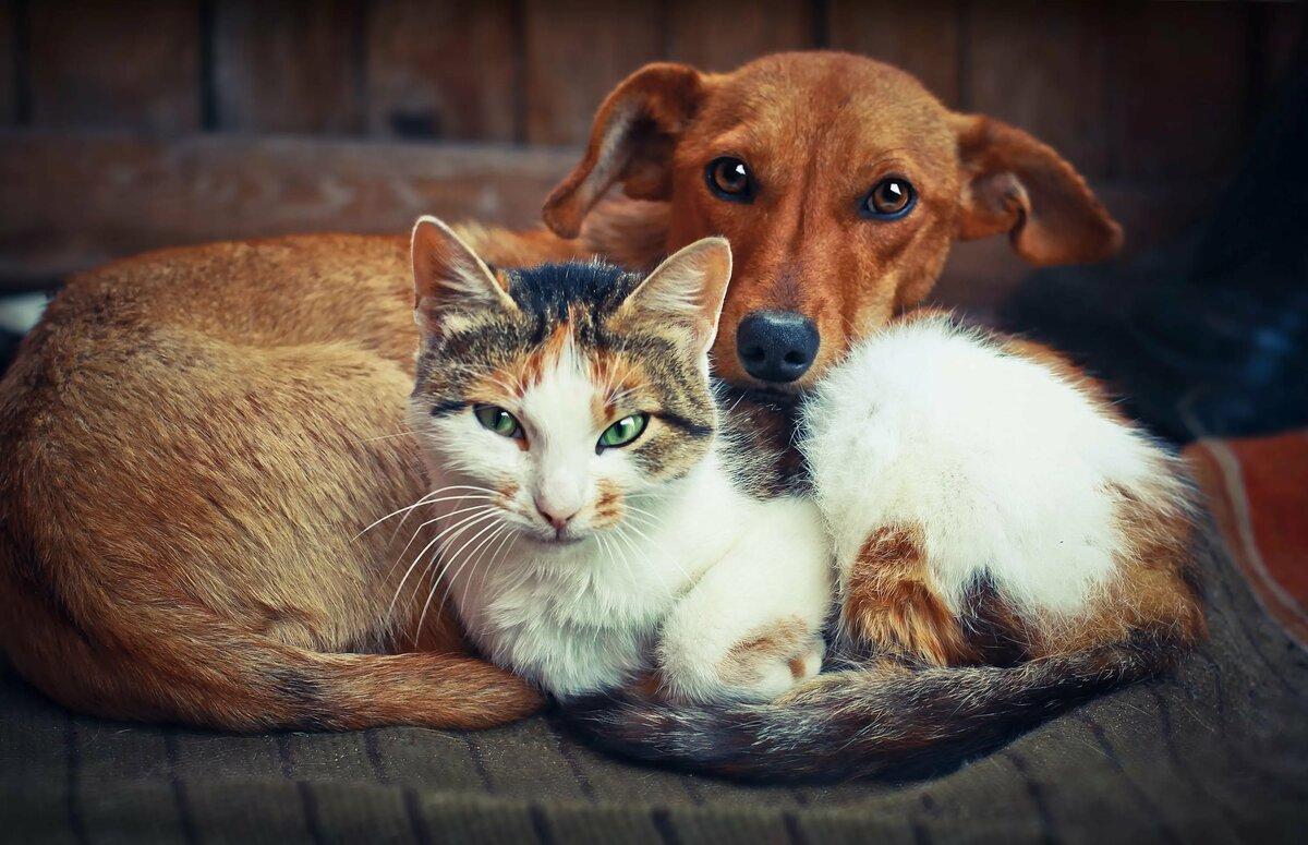 картинки собак из кошками нового