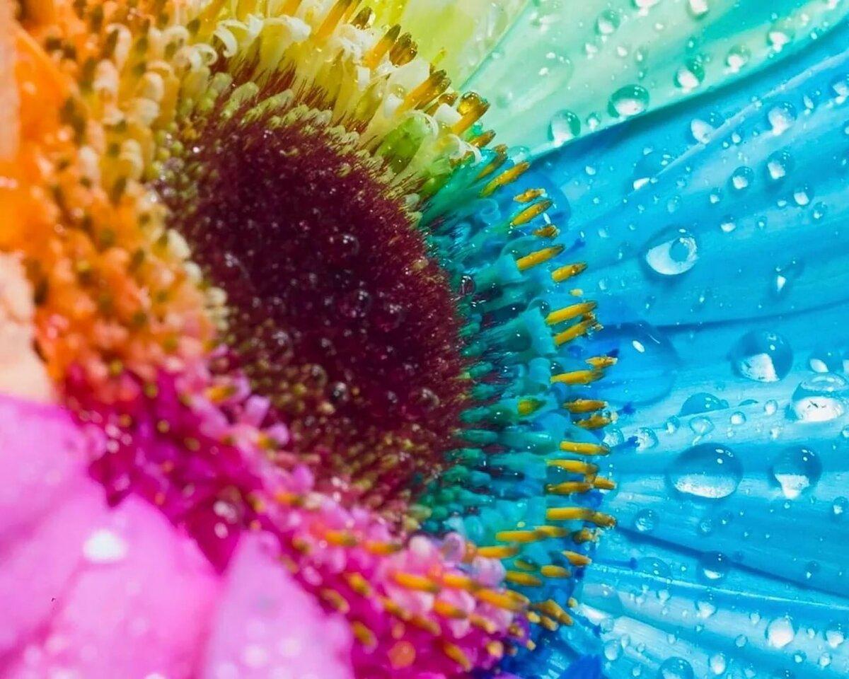 Открытку оригинально, картинки радуга цветы
