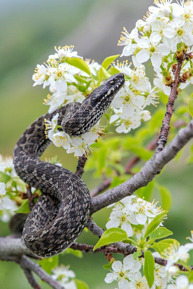 картинки змеи с цветами насыщенна различными техниками