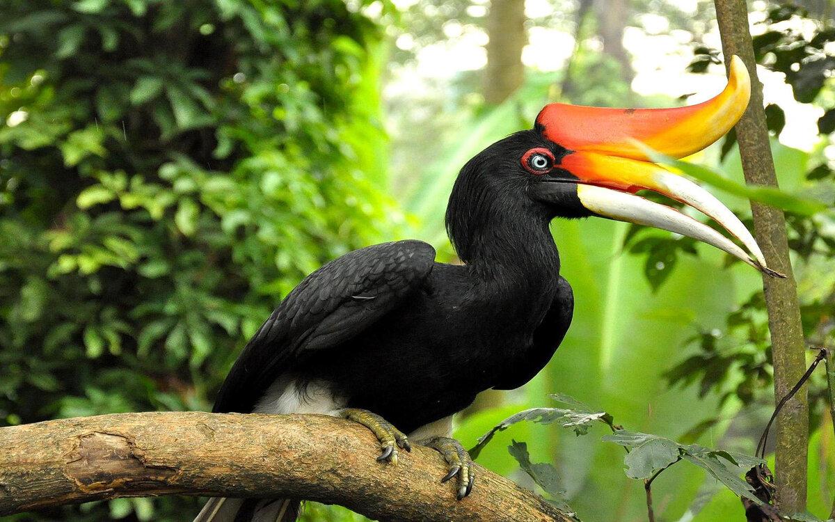 птицы африки названия и фото топперов каталоге