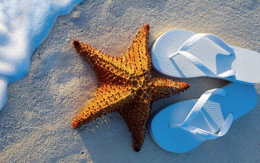 Картинки морской звезды море