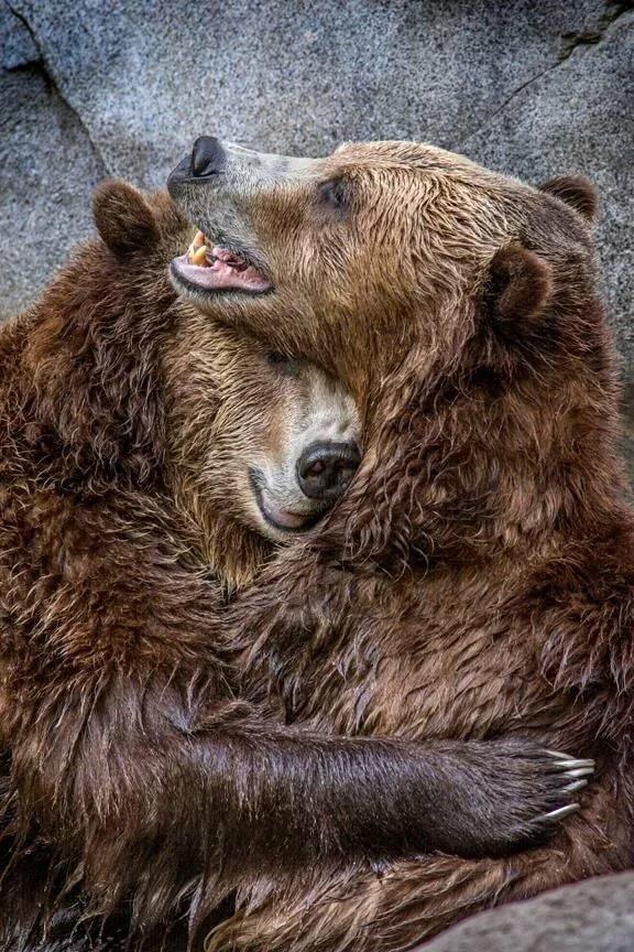 Картинки обнимашки медведи