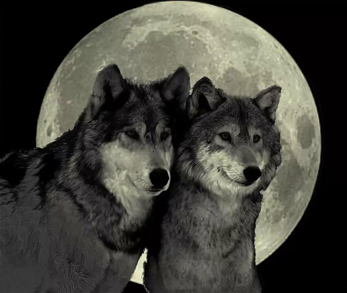 Картинки черный волк с надписями