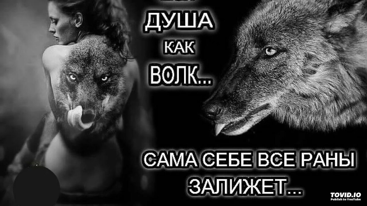 картинки с фразами со волки смыслом о жизни и любви этого достаточно