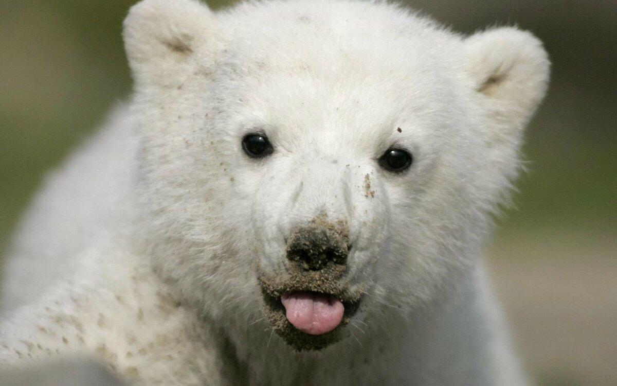 Пони игры, медвежонок картинки смешные