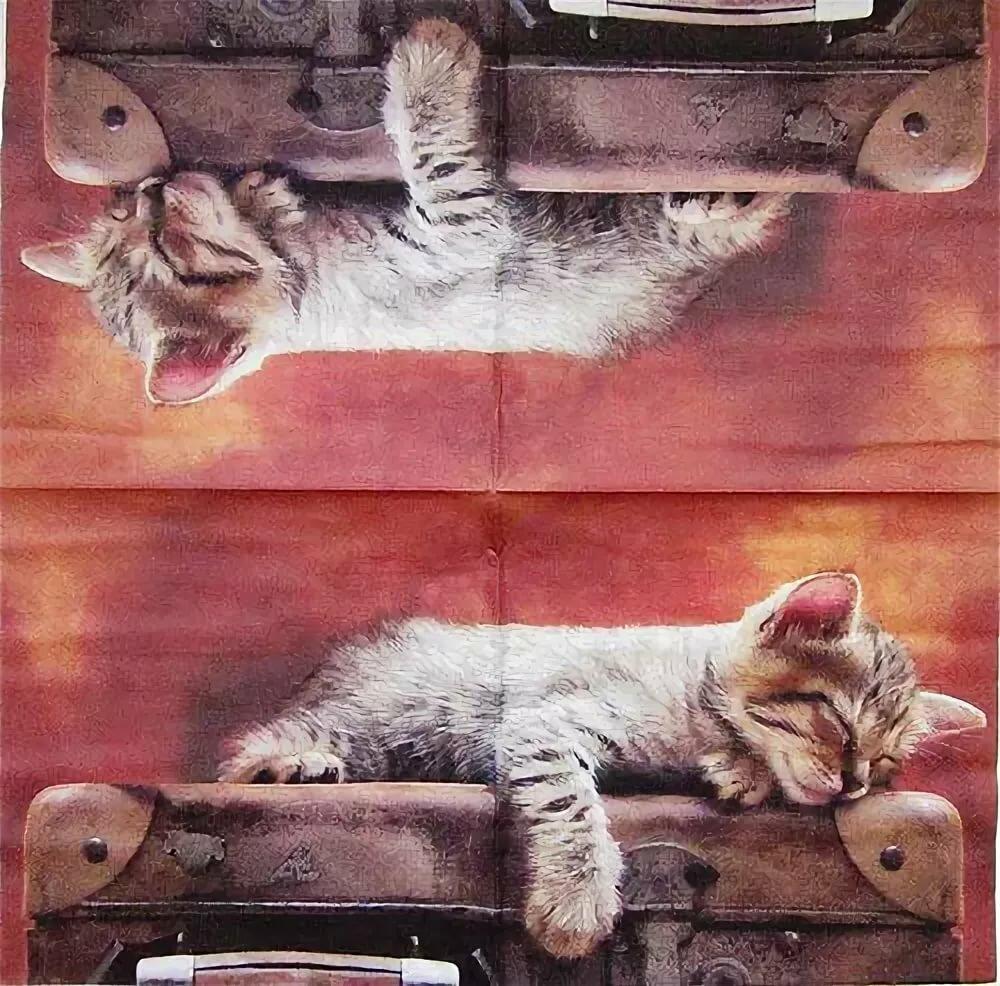 картинки спящий кот декупаж автоматы используются