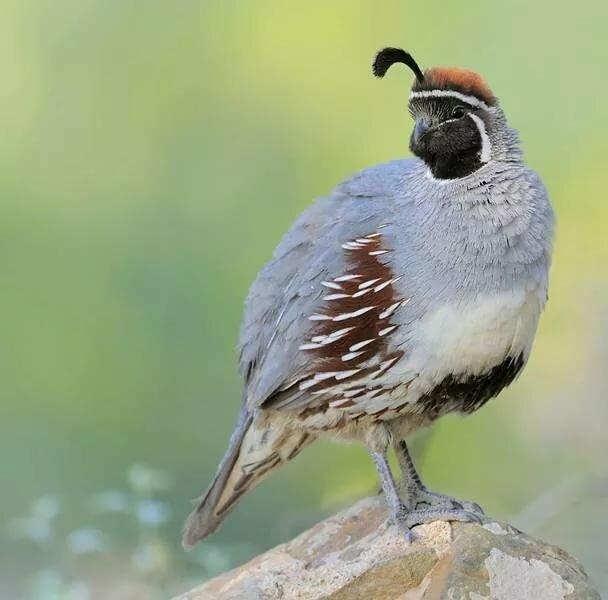 Фото и название всех птиц