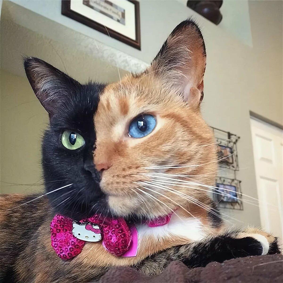 пвх лодки картинки необычного кота для