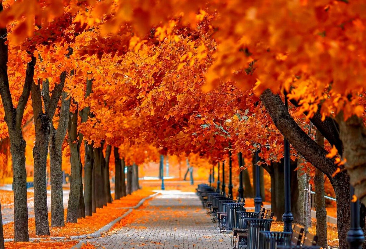 картинки красивые на тему осень в городе наконец