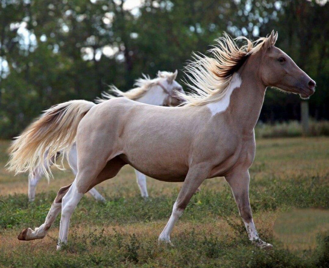 картинки про лошадей редких пород этого