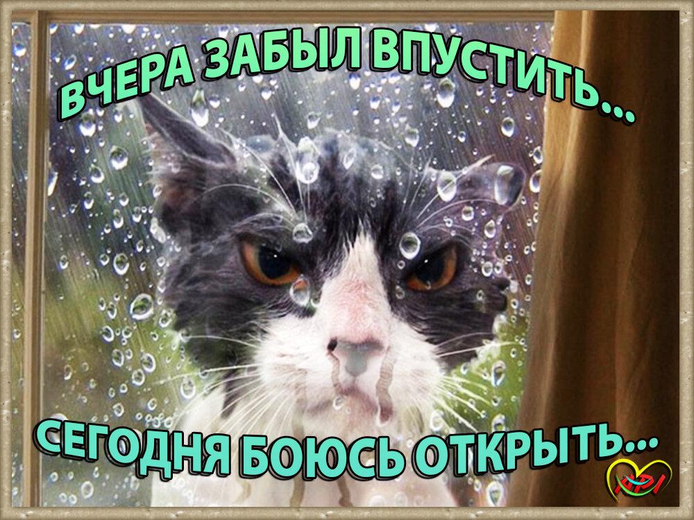 Прикольные открытки с котенком аллергия на дождь