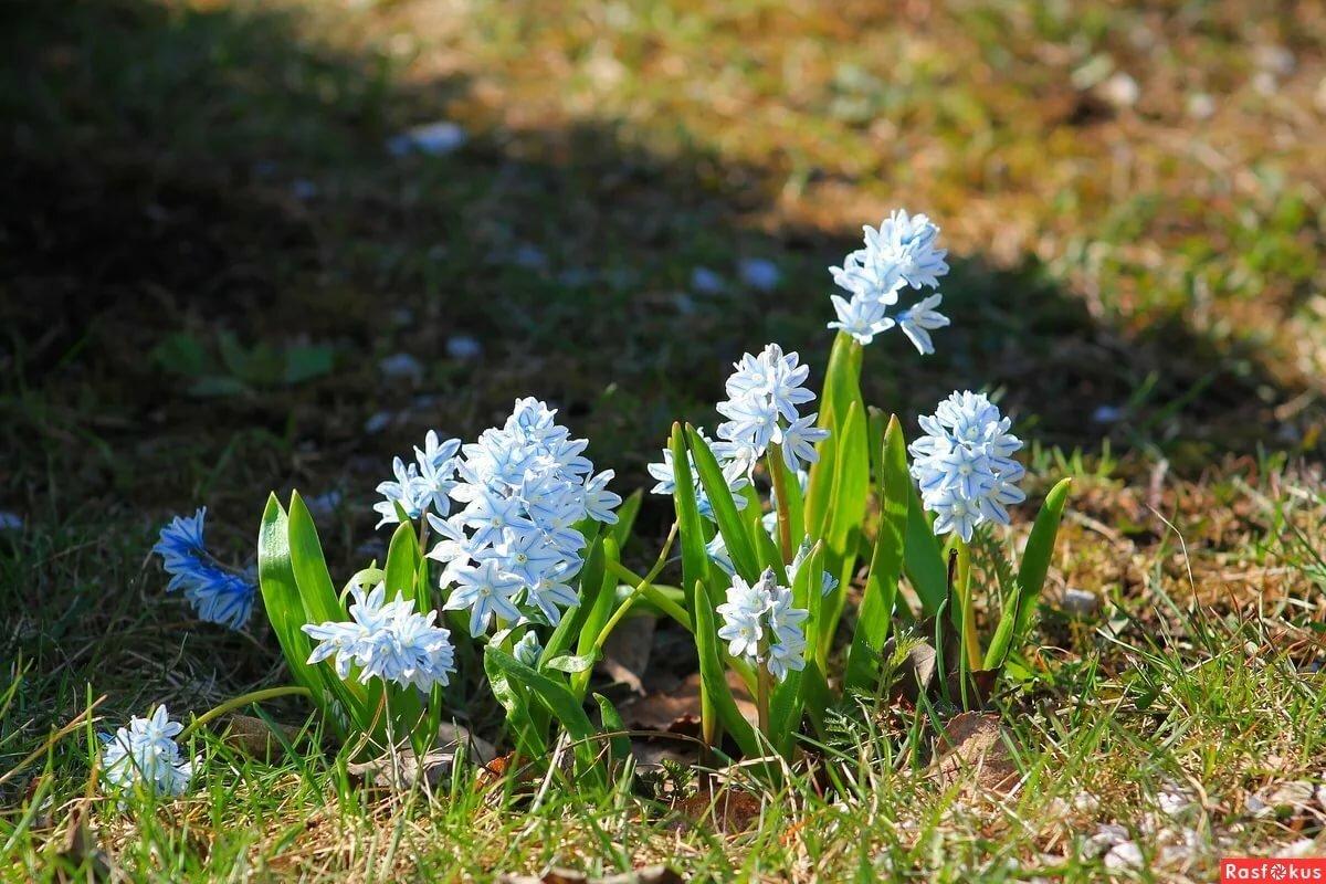 картинки пушкиния цветок как нас
