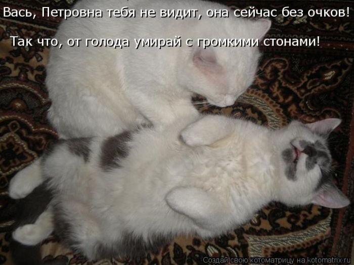 Картинки котов влюбленных с надписями, тренеру художественной
