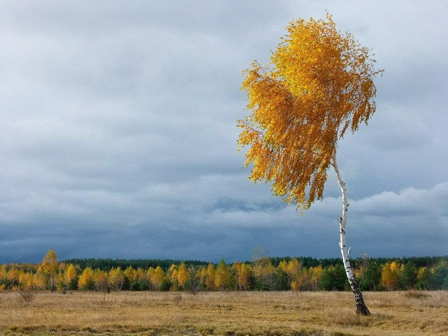 золотистый ветер картинки время