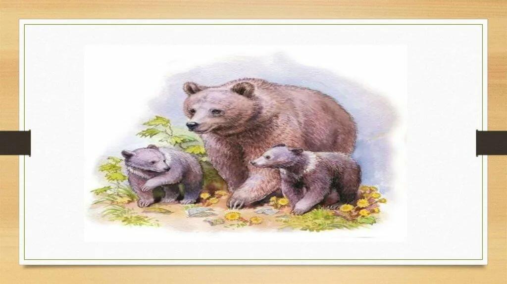мясо иллюстрации к рассказу в бианки купание медвежат гамова родила ребенка