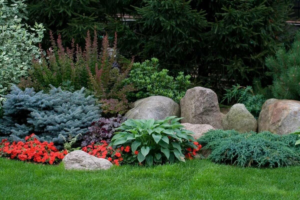 Вечнозеленые растения для клумбы фото и названия