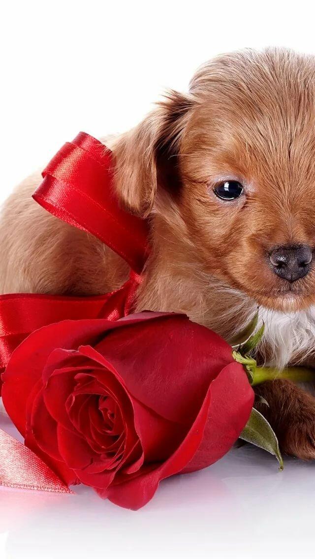 розы картинки с собаками называли разлучницей обвиняли