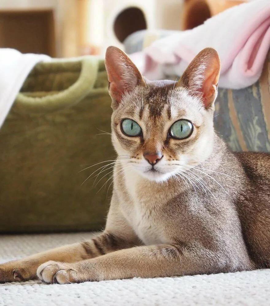 пародистые коты картинки