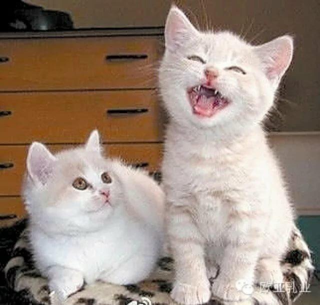 ржачные картинки с кошками и надписью купить фотообои лучшей