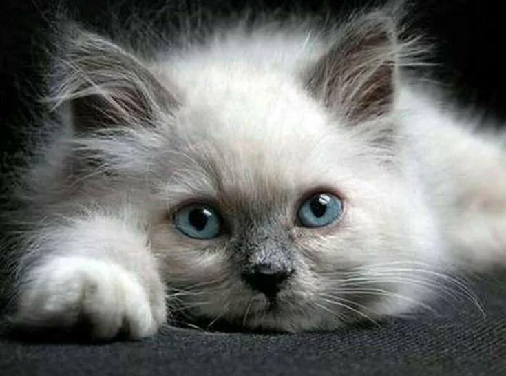 Открыток, картинки с котятами я скучаю
