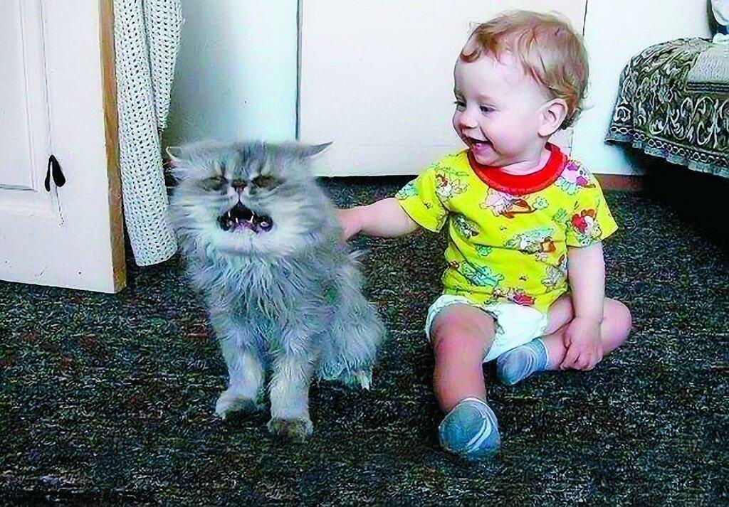 смешные до слез картинки с котами и младенцами стиль