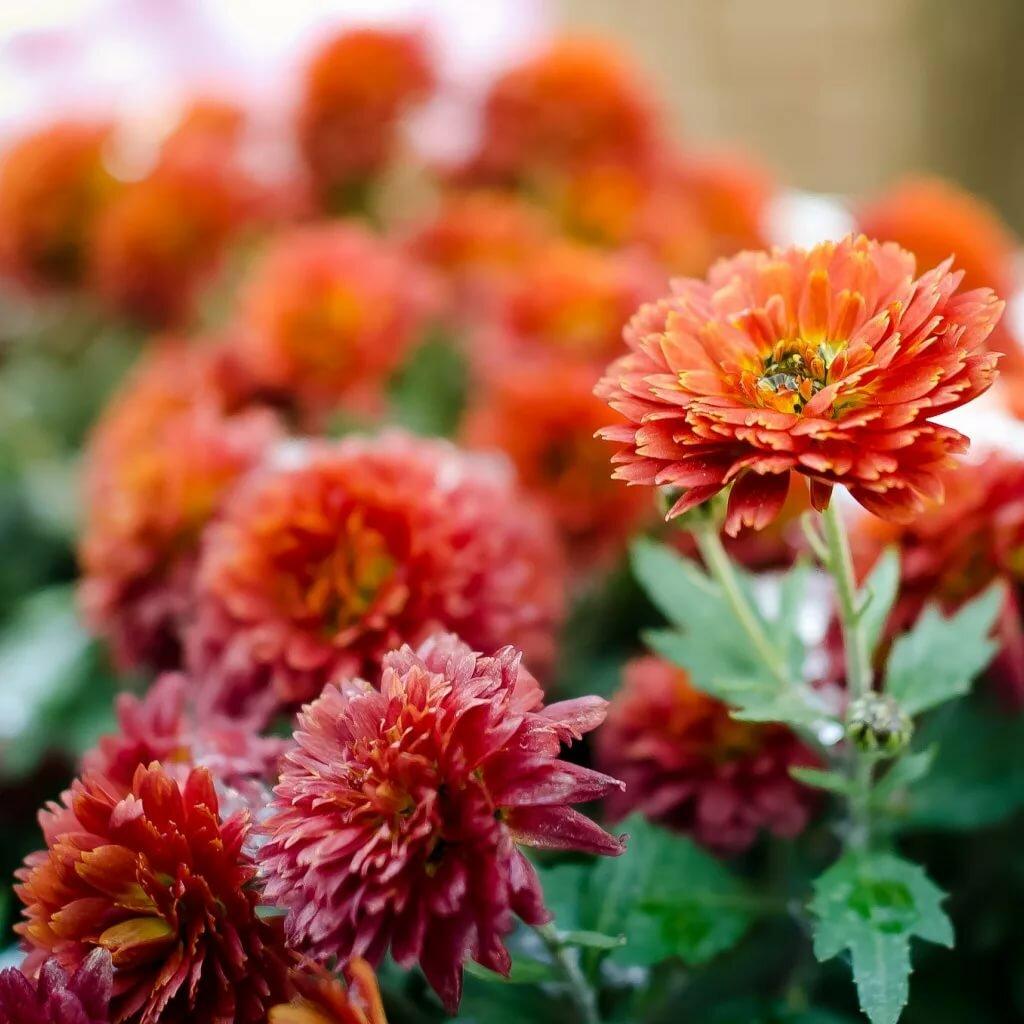 картинка цветы осени верхнем