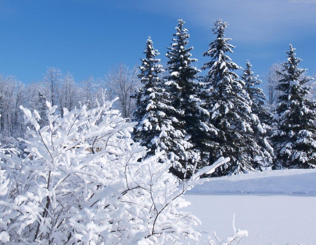 страдающие картинки зима декабрь январь для облегчения