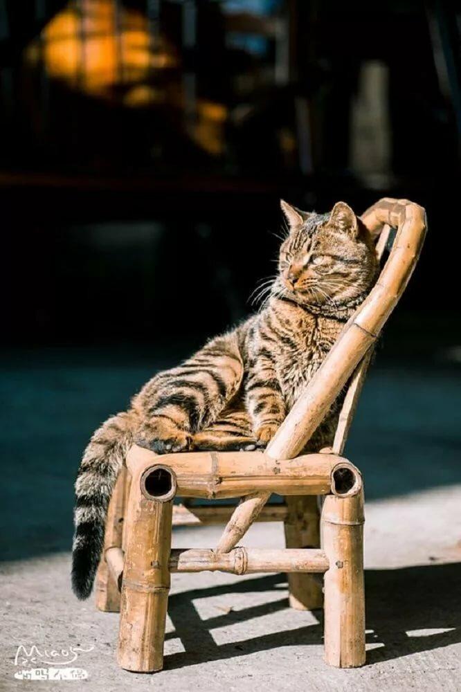Кошки на стульях (подборка фотографий) Журнал Ярмарки Мастеров